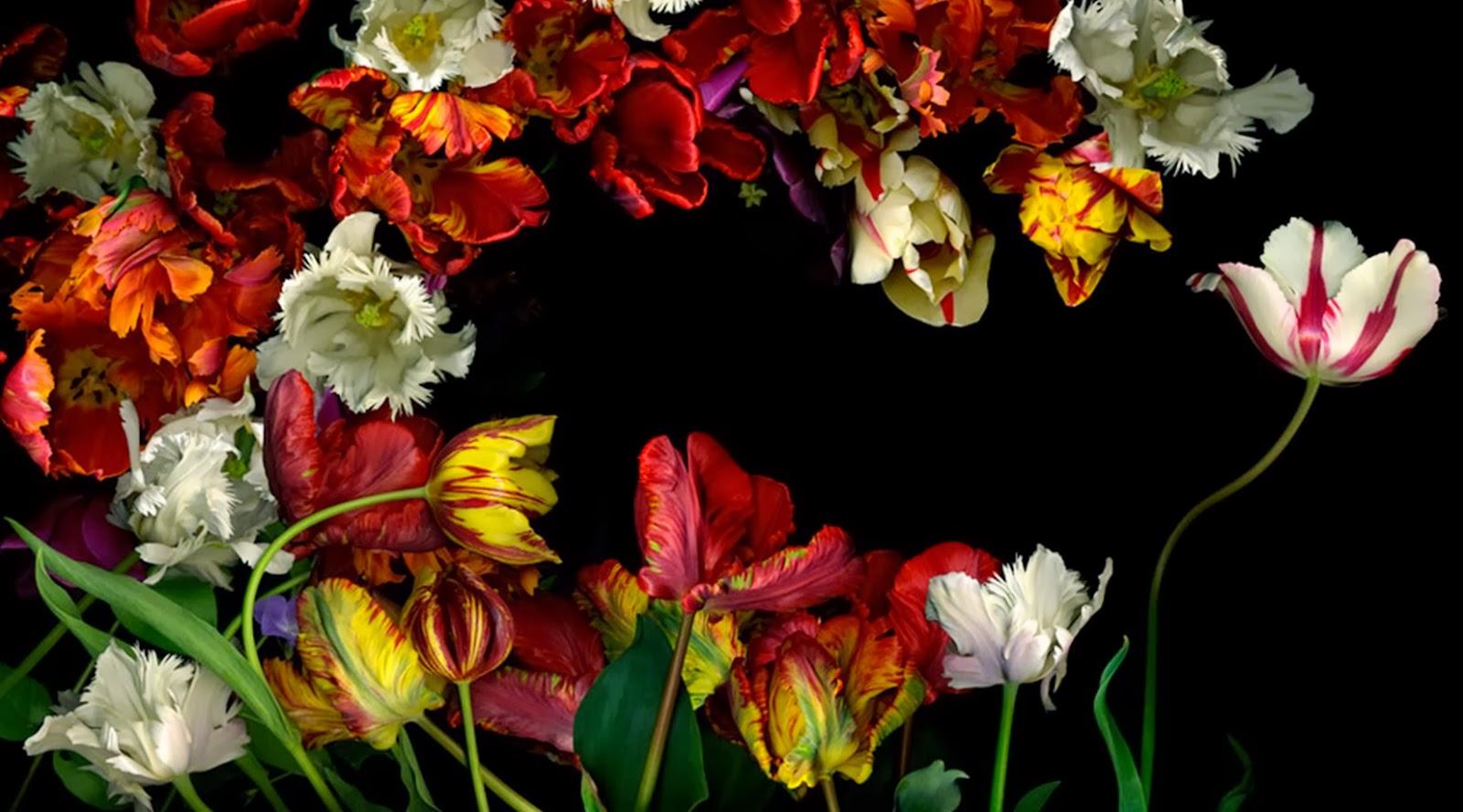 Cuadros modernos pinturas y dibujos cuadros de flores for Imagenes de cuadros abstractos para habitaciones