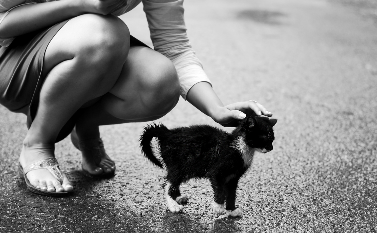 Lo que todo gato quiere  (Harry styles y tu) TERMINADA - Página 6 Gato+lluvia1