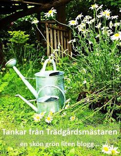 Bloggar efter växtzon