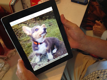 Joe Brosk Shows Off His Corgi, named Murdoch.