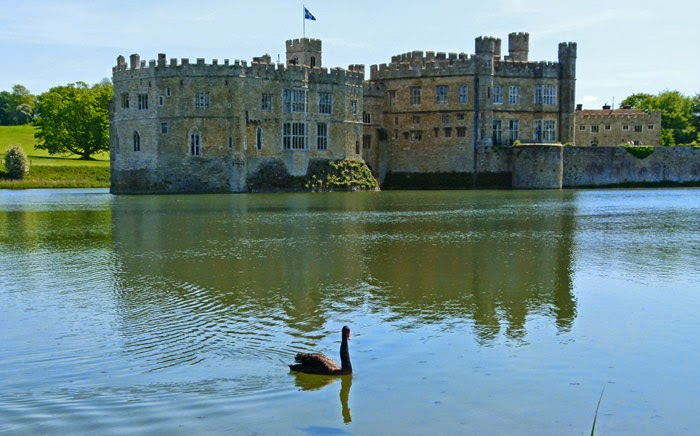 Leeds Castle, black swans, Lady Baillie