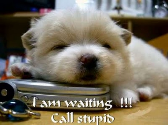 31 Funny Animals Pictures With Funny Text....!! ~ FULL N FENIL 7