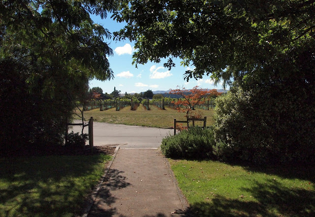 Garden and vineyard view at Palliser Estate - Martinborough
