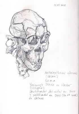 Australopithecus-afarensis-Selam