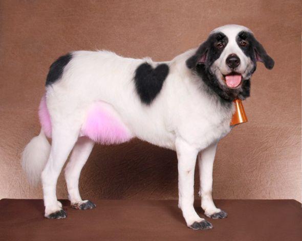 Ren Netherland fotografia animais estimação cães cachorros extreme pets fantasia Vaquinha