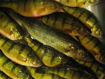 February fish fry