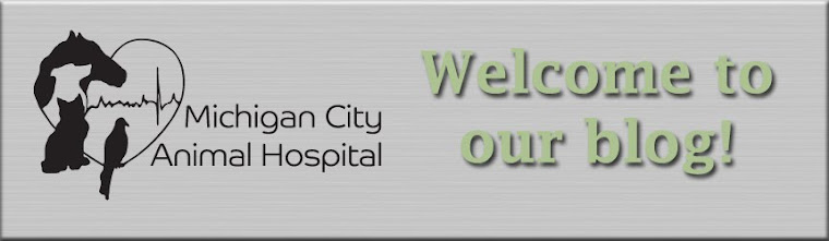Michigan City Animal Hospital