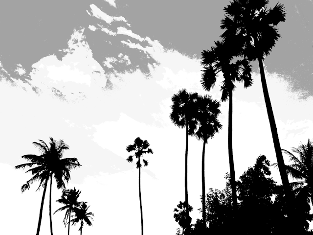 silhouette of palm trees in shades of grey