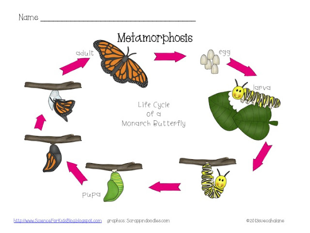Insect Metamorphosis Worksheet Click on the worksheet to pick