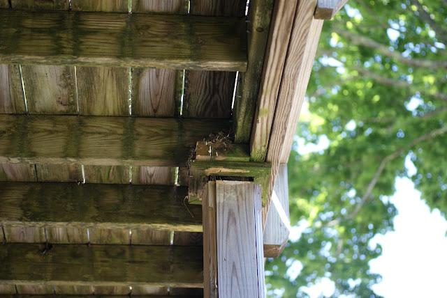 Eastern Phoebe (Sayornis phoebe) nest