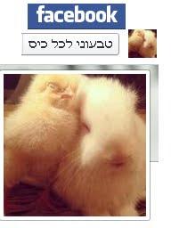 טבעוני לכל כיס גם בפייסבוק לחץ על התמונה לעבור לדף