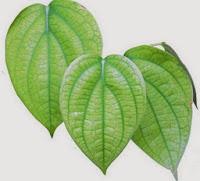 cara mengobati mata rabun dengan daun sirih