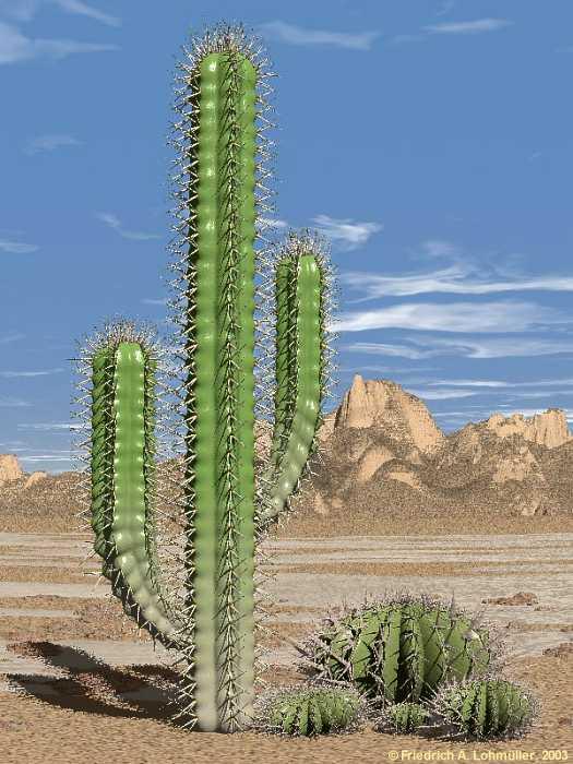 cactus20pic1.jpg