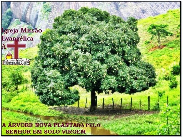 IGREJA MISSÃO EVANGÉLICA