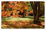 Φθινόπωρο 1