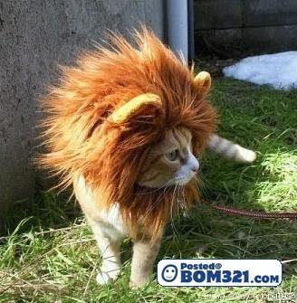 Singa Terlepas Dari Kandang!