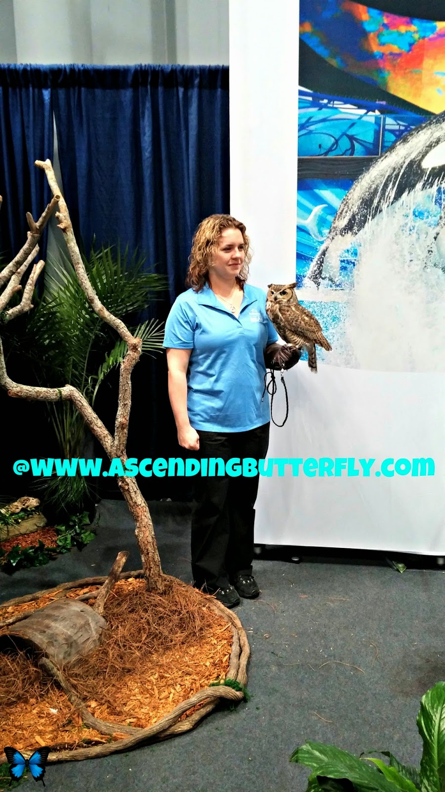 Sea World Display Area at 2014 New York Times Travel Show, Owl