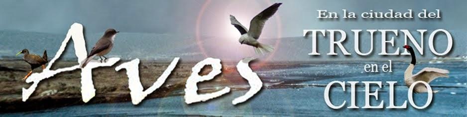Aves en Talcahuano
