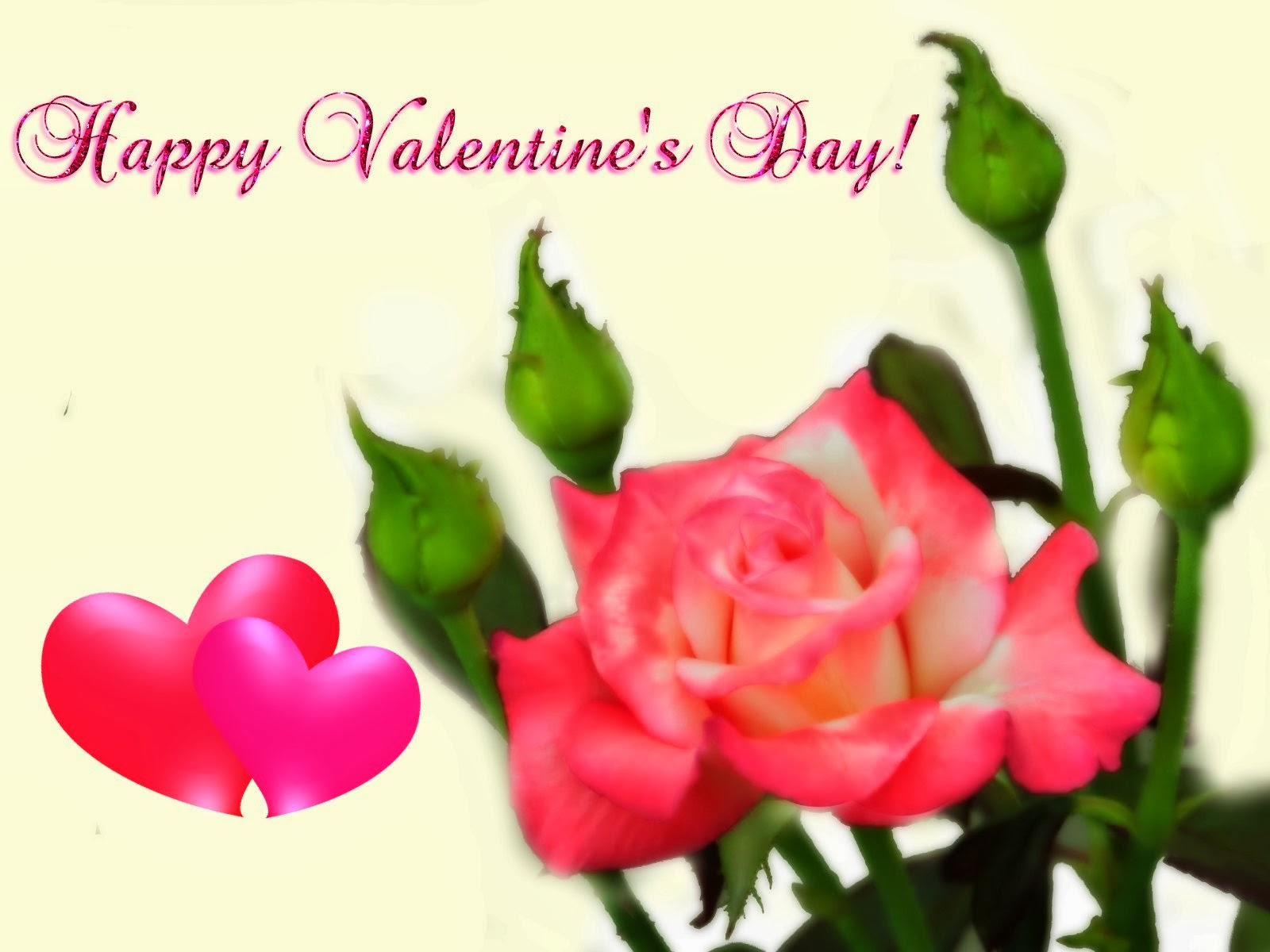 Happy valentine day red rose images wallpapers
