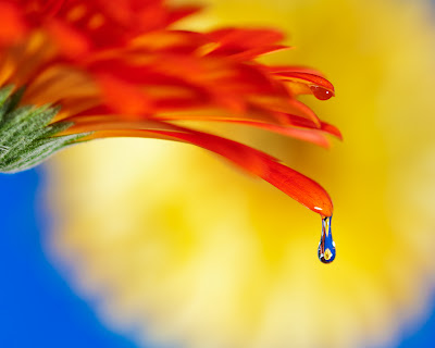flower photography tutorial