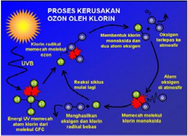 chloroflourocarbons essay