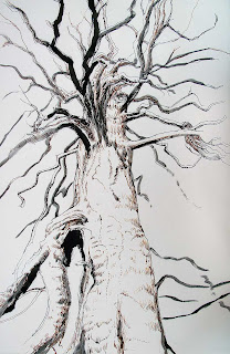 big tree, old growth, pen & ink, pen and ink, ink brush, tree