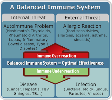 Un sistem imunitar echilibrat