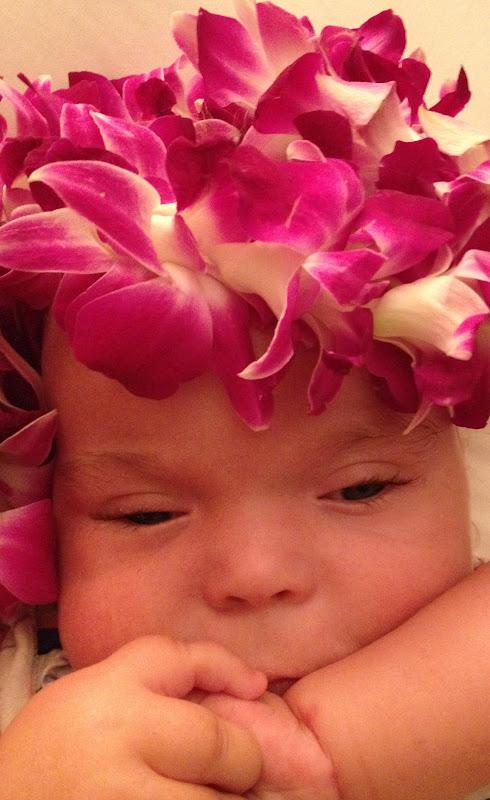 Little Lucia: Aloha and a girl named GINNY!