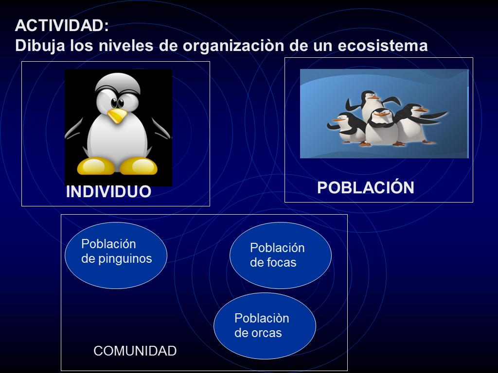 El ecosistema for Organizacion de un vivero