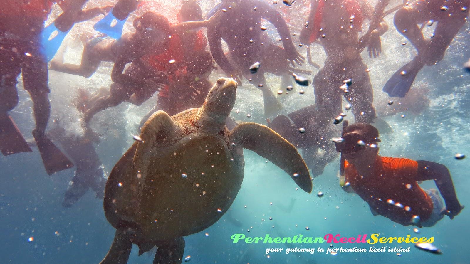 Pakej pulau , pakej snorkeling , pulau perhentian kecil 2015