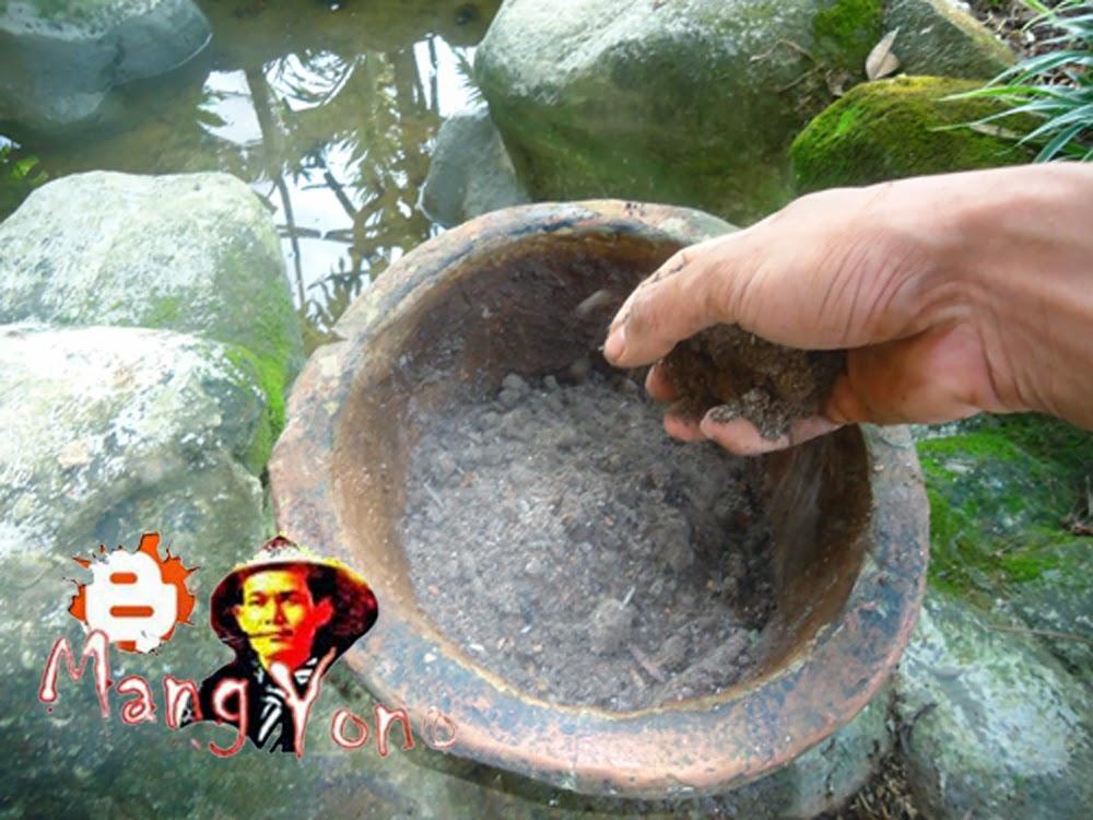 (vii). Mengisi pot dengan Media tanam untuk Bunga Lidah Mertua