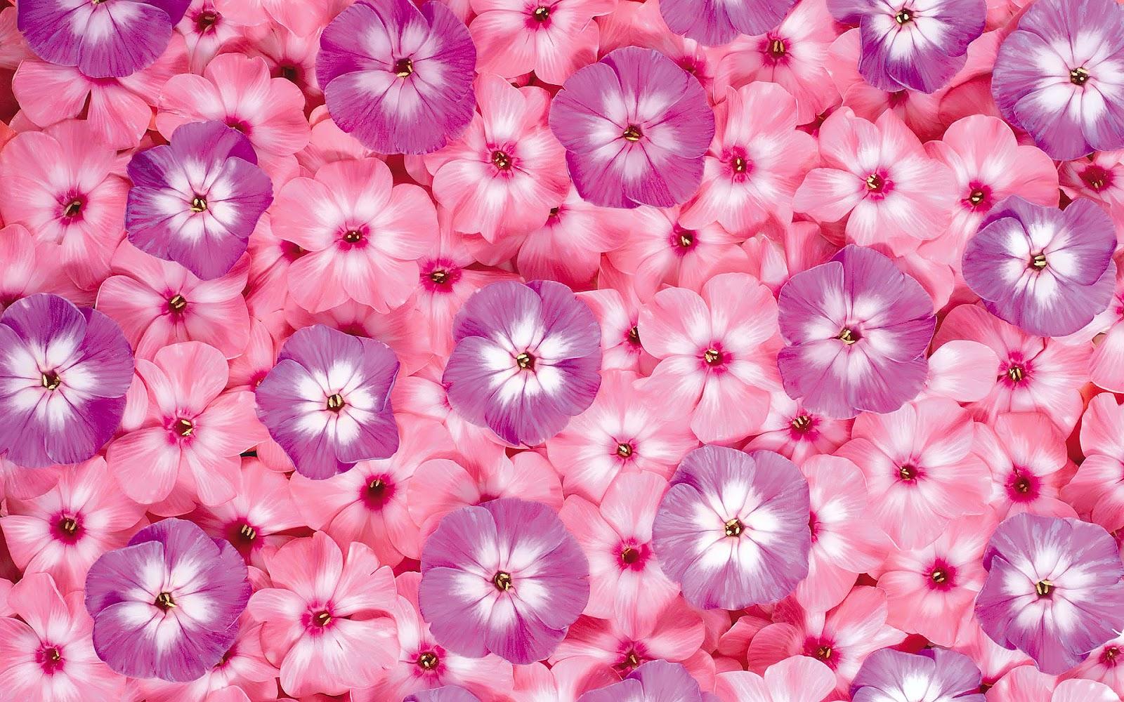 http://2.bp.blogspot.com/-4DhyWr7kf6s/T4bEg_ENmWI/AAAAAAAAeec/P1iqExsFZT0/s1600/Bloemen-achtergronden-hd-bloemen-wallpapers-bloem-afbeelding-01.jpg