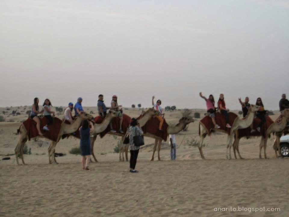 Camelos no Deserto das Arábias, Dubai