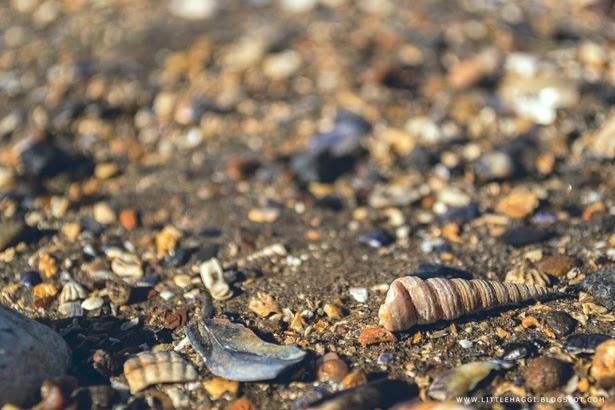 Fotografia caracola playa de Cramond