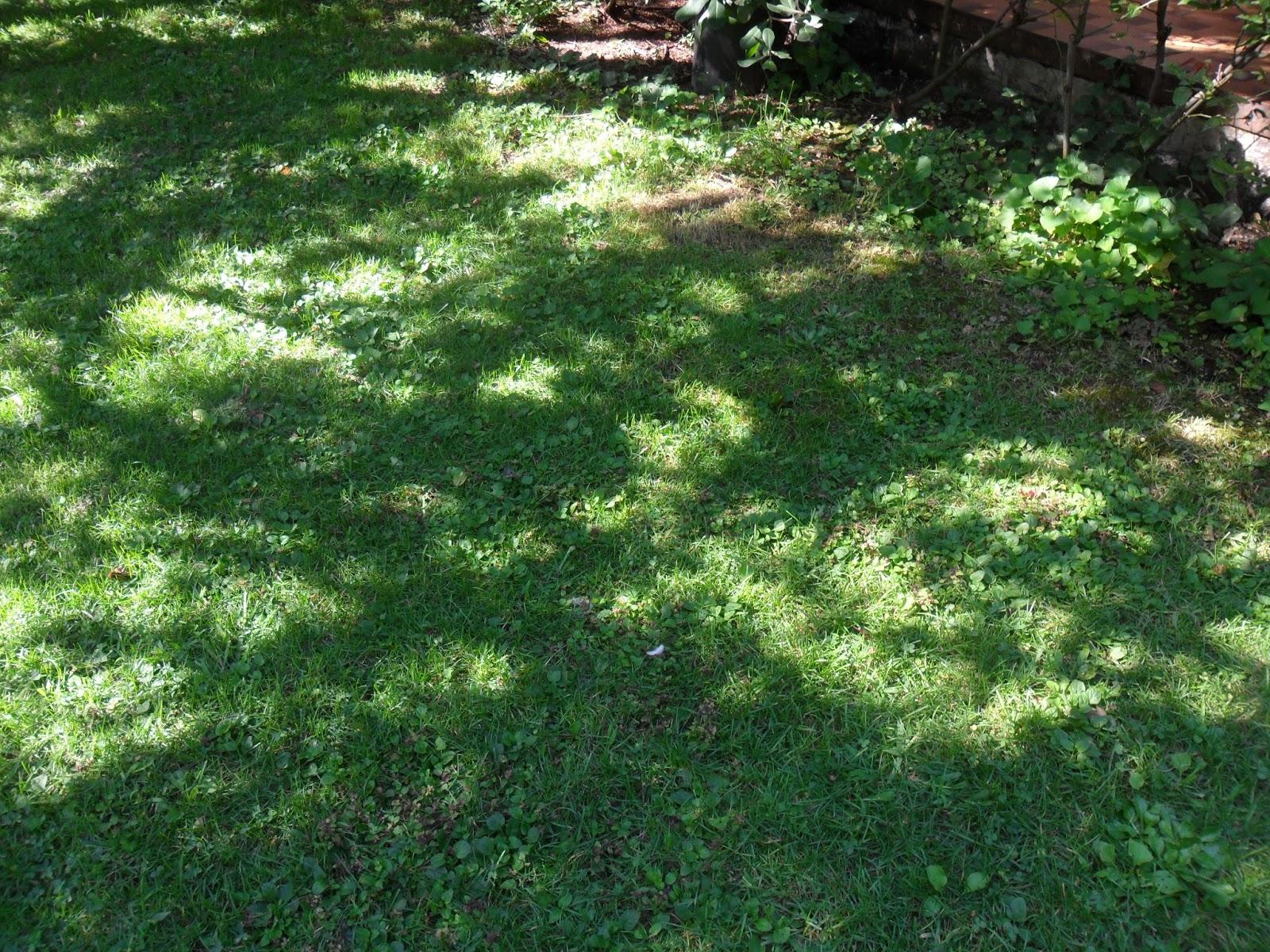 ilclanmariapia: Dal mio giardino : nocciole