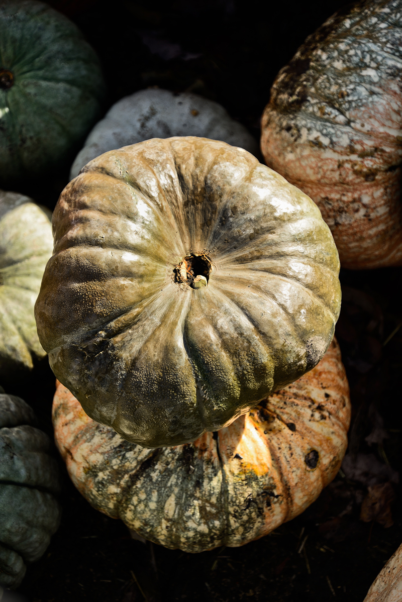 #Corn #Pumpkin #Fall #FoodPhotography #SimiJoisPhotography
