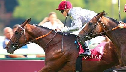 Qatar Arc Trial
