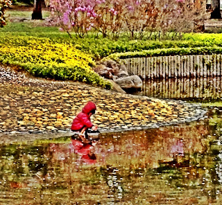 Japanese boy searching for tadpoles in spring