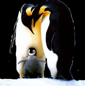 l 39 oeil et la fl te vaut il mieux se r incarner en pingouin qu 39 en canard. Black Bedroom Furniture Sets. Home Design Ideas