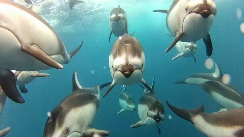A group or pod of dolphins