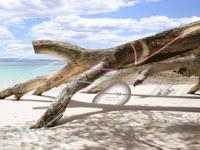 tronco-praia