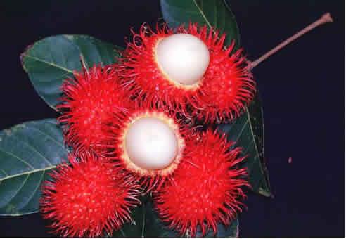 BUAH BUAHAN: Gambar Buah-buahan Tempatan