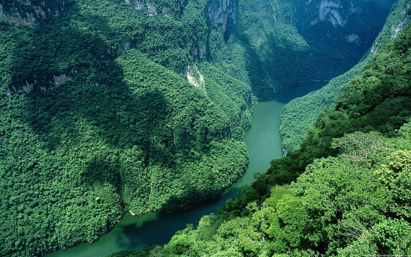 Evergreen Forest Scenery Wallpaper