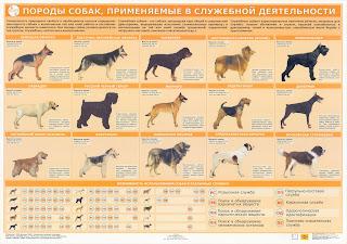 Породы собак, применяемые в служебной деятельности