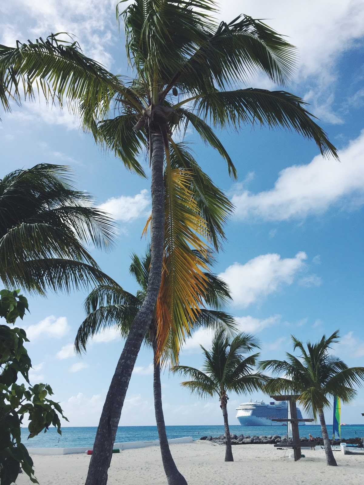 palm tree view, bahamas, caribbea, princess cruises