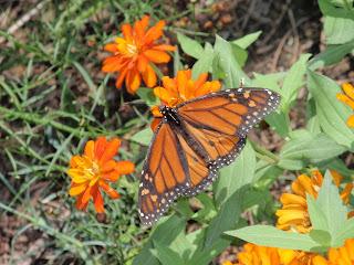 butterfly garden, zoo
