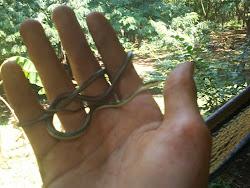 little baby  snake