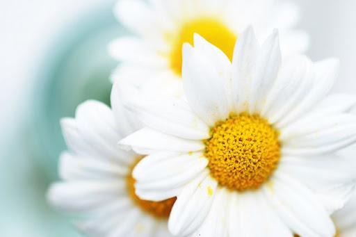 Flores, bonitas y frescas flores - Fácil y Sencillo