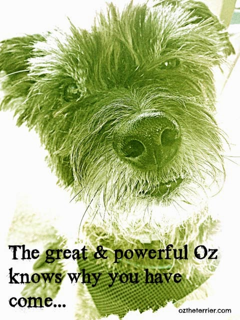 Oz the Terrier as the great & powerful Wizard of Oz