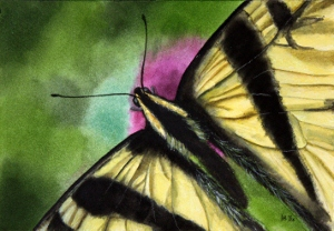 https://www.etsy.com/listing/247876299/butterfly-watercolor-painting-original?ref=listing-shop-header-1